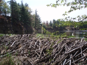 Running through a Beaver Dam